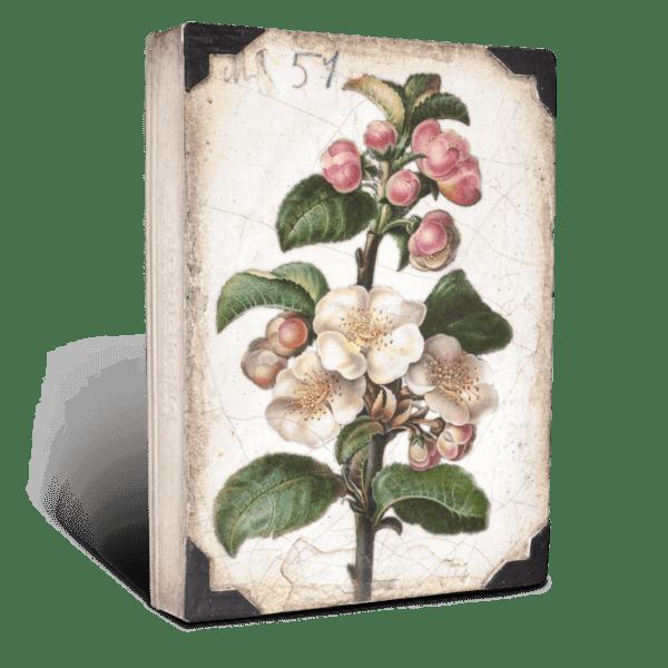 Apple Blossom, Sid Dickens