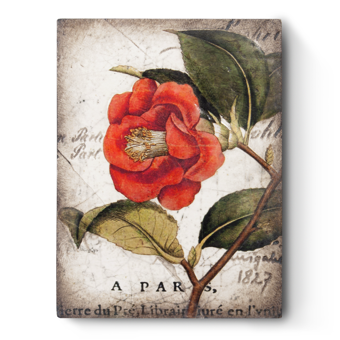 Red Camellia, Sid Dickens