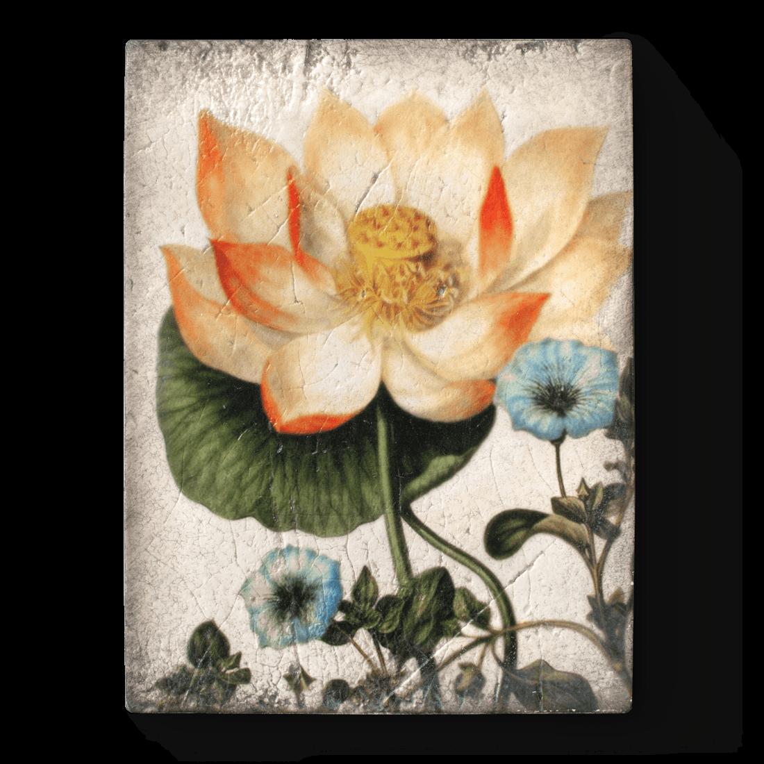 Sacred Lotus, Sid Dickens