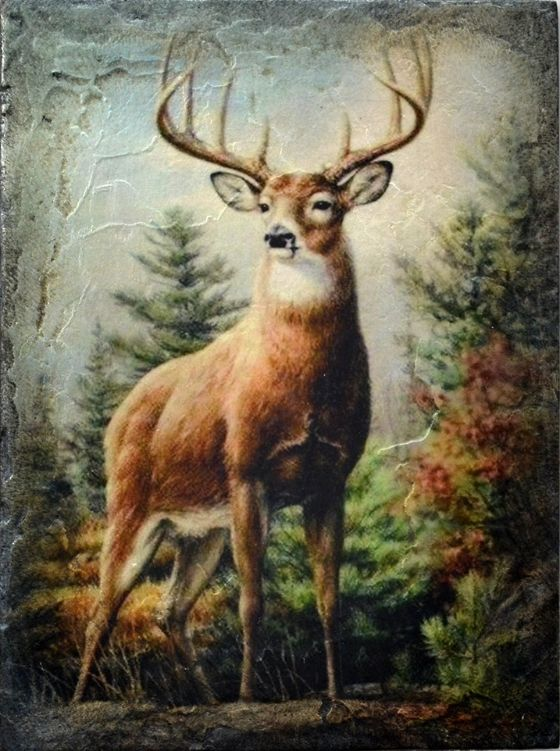 Sid Dickens - Noble Stag